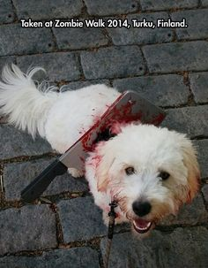Zombie Dog - I so want to do this now.