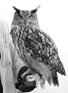 Before i die...I WILL hold an owl. this is #1 on my bucket list. I would die instantly if i got to hold one.