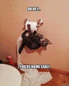 CAT MEMES | Clean Meme Central