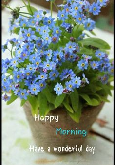 Forget me not, pretty blue flowers, lovely in any garden Blue Garden, Shade Garden, Dream Garden, Garden Plants, Decoration Plante, Garden Inspiration, Dahlia, Container Gardening, Gardening Vegetables