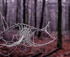 Wish I could find a leftover web in the snow to photograph.