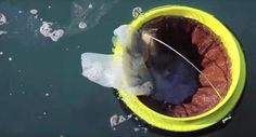 Floating Seabin trash collector could rid the oceans of plastic waste