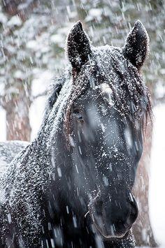 Snowy Horse by John Bosley