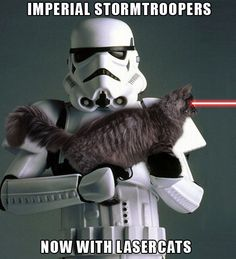 20 Of The Best Cat Wars Memes To Get You Ready For Star Wars - World's largest collection of cat memes and other animals Star Wars Witze, Star Wars Jokes, Funny Cat Memes, Funny Cats, Funny Animals, Memes Humor, Hilarious, Adorable Animals, Stormtrooper