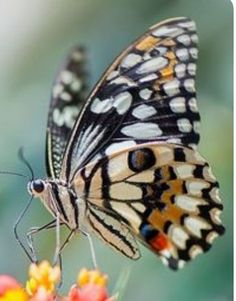 🍁🍂🍂🍁 Butterfly House, Butterfly Kisses, Butterfly Art, Monarch Butterfly, Animals And Pets, Cute Animals, Learn Photography, Beautiful Butterflies, Beautiful Creatures