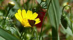 Photos by Cassio Zangarini - Nature