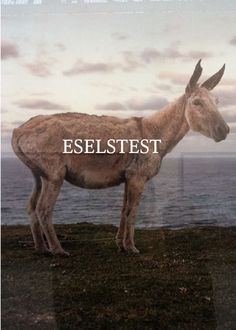 Eselstest 1
