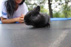 Little rabbit.