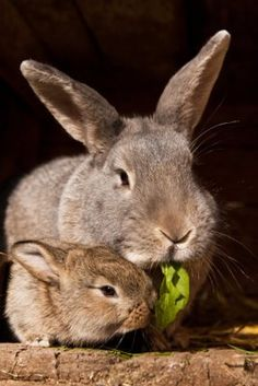 Mother's Day, Animal Kingdom