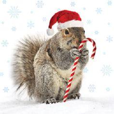 SCOUPY wenst iedereen een fijne kerst!