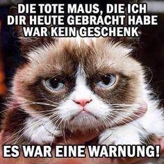 New memes graciosos humor grumpy cat Ideas Funny Cats And Dogs, Funny Animals, Cute Animals, Really Funny, Funny Cute, Funny Images, Funny Pictures, New Memes, Memes Humor