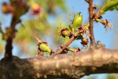 Bird Feeders, Stud Earrings, Outdoor Decor, Agriculture, Plant, Life, Stud Earring, Earring Studs, Teacup Bird Feeders
