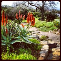 by AfricanTours, via… Waterwise Garden, African Plants, Beautiful Gardens, Trees To Plant, Farm Gardens, Garden Ideas South Africa, Plants, Water Wise Landscaping, Botanical Gardens