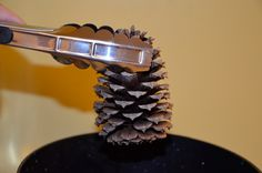 On pinterest pine cones pine cone crafts and fire starters