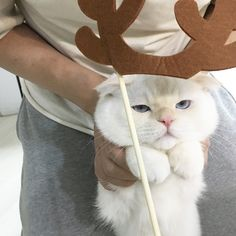 Sep 2019 - soonmoo_cat : aesthetic â fashion Animals And Pets, Baby Animals, Funny Animals, Cute Animals, I Love Cats, Crazy Cats, Cool Cats, Amor Animal, Funny Cat Compilation