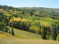 Beautiful fall foliage and mountain meadows after riding on the smaller chair lift at Park City Mountain Resort September 2015