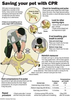 Saving your pet with CPR.  Hope I NEVER have to use this, but good to have nearby in case...