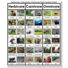 what list describes the diet of a carnivore