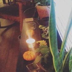 Mood lighting. #plant #plants #plantsofinstagram #plantsofinsta #plantlove #plantlady #plantporn #plantgang #plantbabies #plantsmakemehappy #plantsmakepeoplehappy #houseplants #urbanjungle #growingthings #greenthumb #phytophilous #greenry #growth #leaf #mood #sproutandstem