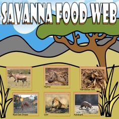 Bring the Savanna to your classroom with this card sort activity. The activity utilizes 24 real-life pictures that will help students create a food chain and/or web.