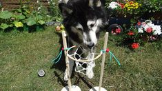 Achtung wild! Immer tierisch was los...: Anleitung: Hunde-Basketballkorb selber machen