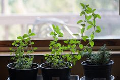 Start an indoor vegetable garden this winter is part of Winter garden Indoor - With enough light and heat, you can grow your own vegetables all year round Indoor Vegetable Gardening, Hydroponic Gardening, Hydroponics, Gardening Tips, Growing Plants Indoors, Herbs Indoors, Growing Raspberries, Plant Information, Winter Vegetables