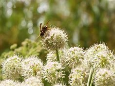 Plant a Pollinator-Friendly Garden • Up Your Animal Magnetism • Bees, butterflies, and other pollinators are becoming scarcer sights. We can do our part to protect them in our own backyards. A simple way to help is to create a wildlife friendly garden. Here are some tips to point you in the right direction.