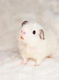 Love those ears!!