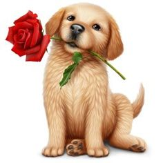 Accept this rose Kittens And Puppies, Cute Puppies, Cute Dogs, Cut Animals, Animals And Pets, Dog Pictures, Cute Pictures, Puppy Images, Kitten Love