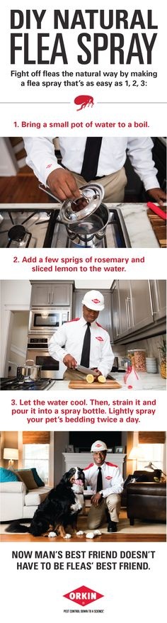 Defend your home from fleas with these simple tips. Learn how to make this DIY flea spray that's safe for your pets, too! For more information on Orkin, visi. Natural Flea Spray, Diy Stuffed Animals, Pet Health, Dog Care, Fleas, Dog Treats, Animals And Pets, Just In Case, Dog Food Recipes