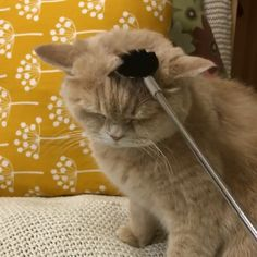 e21181a58 Kitty get a most sastify brushing ever Funny Animal Videos, Super Cute  Animals, Cute