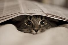 Shh, I'm hiding. pic.twitter.com/mHlx3Dwp8v