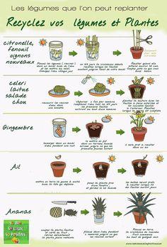 So Bio, So Local, So Positive   Recyclez même vos légumes ! Découvrez ceux que l'on peut replanter