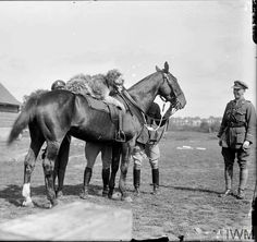 WWI, 8 Sept 1917; A regimental mascot of the 1st Battalion, North Staffordshire (Prince of Wales's) Regiment near Cassel. The regimental dog is sitting on a horse. Cropped. © IWM (Q 3058)