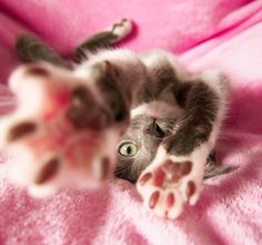 Can't get enough of #kitty paws! #socute #adorable #cats #pets