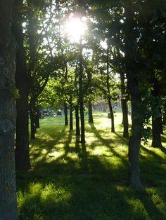 avonhead park cemetery
