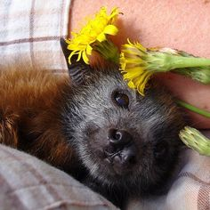 This bat reminds me of my dog, in a way. So stinkin cute!