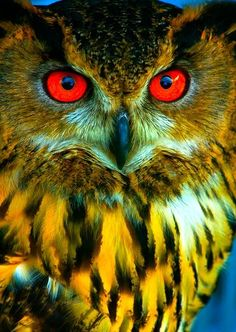 OWLS ARE INCREDIBLE❤