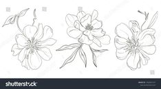 Find Vector Handdrawn Black White Peony Flowers stock images in HD and millions of other royalty-free stock photos, illustrations and vectors in the Shutterstock collection. Vector Hand, Free Vector Graphics, White Peonies, Peony Flower, Abstract Flowers, Best Artist, Art Sketches, Photo Art, Monochrome