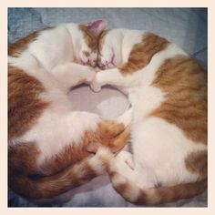 This is going to be my kitties someday