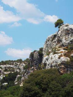 """Ispica (RG) - Un albero solitario tenta il suicidio nella Cava di Ispica, un tortuoso taglio naturale tra rocce calcaree e vegetazione rigogliosa - A solitary tree tries to commit suicide into Cava Ispica, """"cava"""" is a false friend of """"cave"""", in Sicily the term """"cava"""" is like """"canyon""""."""