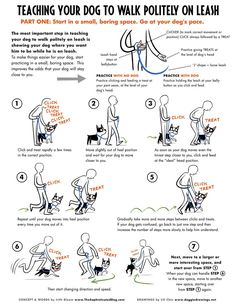 How to Teach Your Dog to Walk on Leash. Posted at http://www.bterrier.com/how-to-teach-your-dog-to-walk-on-leash/