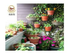 It is a 7 story building filled with the herbs and flowers in balcony which is not less than any nature #RaviGroup