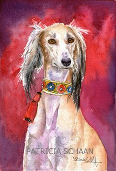 SALUKI CHARMING HEAD STUDY LOVELY DOG PRINT MOUNTED READY TO FRAME