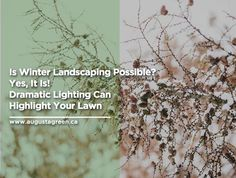 Beautify your yard this holiday season with a stunning Add drama and brilliance and light up your neighbourhood with these few Dramatic Lighting, Landscaping Tips, Irrigation, Growing Plants, Winter Time, Light Up, Lawn, The Neighbourhood, Highlights