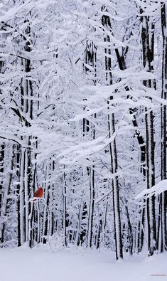 Winter still near Charleston, West Virginia • photo: Ron Jones on FineArtAmerica