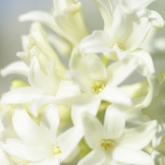White flowers that are beautiful. Butterfly Flowers, White Flowers, Beautiful Flowers, Butterflies, Calla Lillies, Teal, Turquoise, White Gardens, Favorite Color
