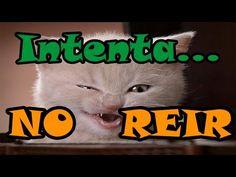 RETO: Intenta ver este Video SIN REIRTE! Los Gatos más graciosos del mundo - YouTube