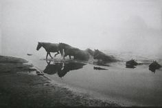 """""""Blame it or praise it, there is no denying the wild horse in us."""" ~ Virginia Woolf"""