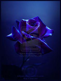 blue valentine legenda